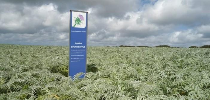 chimica-verde-cardi